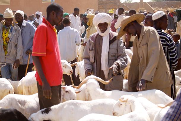 Visite du Ministre du Commerce et de la Promotion du Secteur Privé au marché de bétail : Disponibilité des moutons, des prix relativement abordables